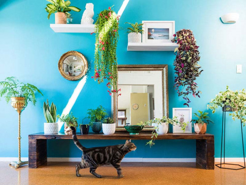 Dining room, blue dining room, blue feature wall, bright interior, plant wall, bright blue paint
