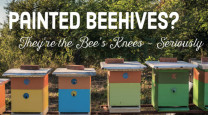 Decorate your beehives in the most bee friendly colours